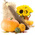Pumpkins and sunflowers Royalty Free Stock Images