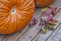 Pumpkins and vine leaves on a wooden deck Stock Photos
