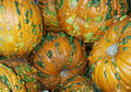 Pumpkins with warts several large orange Stock Photo