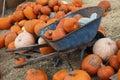 Pumpkins in a wheel barrow Stock Photography