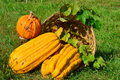 Pumpkins in wicker basket Stock Photo
