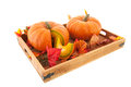 Pumpkins on wooden tray with leaves isolated over white background Stock Photo