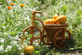 Pumpkins in the woven basket in the form of bicycle green grass and calendulas on background Royalty Free Stock Images