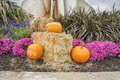 Pumpkisn flowers and hay pumpkins halloween decoration Royalty Free Stock Images