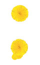Punctuation marks made from dandelion flower isolated on white background Stock Photos