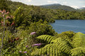 Punga fern by the lake Stock Photography