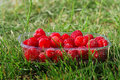 Punnet of raspberries Royalty Free Stock Photography