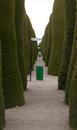 Punta arenas cemetary alley green trees Stock Images