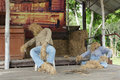 Puppets made ​​of straw Royalty Free Stock Image