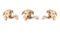 Puppies and box beige sitting in a Royalty Free Stock Photo