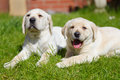 Puppies in the garden Royalty Free Stock Photo