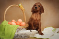 Puppy and basket with easter eggs Royalty Free Stock Photo