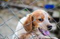 Puppy  behind a  fence. Royalty Free Stock Photo