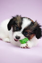 Puppy biting ball Royalty Free Stock Photo