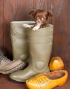 Puppy in a boot Stock Photo