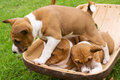 Puppy clambering over siblings Stock Images