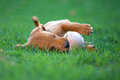 Puppy dog ​​biting a ball Royalty Free Stock Photo
