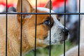 Puppy Dog behind bars Royalty Free Stock Photo