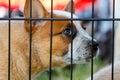 Puppy Dog behind bars Royalty Free Stock Photo