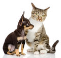 The puppy dog and cat isolated on white background Stock Photo