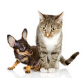 The puppy dog and cat isolated on white background Stock Photos