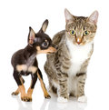 The puppy dog and cat isolated on white background Stock Images