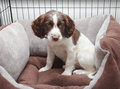 Puppy dog in comfy bed Royalty Free Stock Image