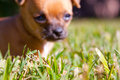 Puppy dog grass lawn Stock Images