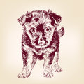 Puppy dog hand drawn vector llustration realistic sketch Stock Photo