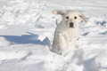 Winter Dog Snow Royalty Free Stock Photo