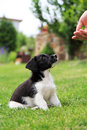 Puppy dog small in the garden beagle crossed with jack russell terrier Stock Image