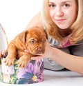 Puppy of Dogue de Bordeaux (French mastiff) Stock Image