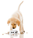 Puppy eating dog food Stock Photo