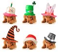A puppy for every occasion birthday st patrick s easter halloween christmas and new year Stock Photography