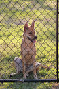 Puppy at Fence Royalty Free Stock Photos