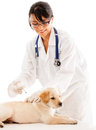 Puppy getting a vaccine Royalty Free Stock Photos
