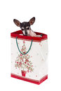 Puppy in gift bag. Christmas gift Royalty Free Stock Photo
