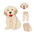 Puppy Golden Retriever Sitting, Baby Dog Labrador Smile. Greeting Card  on White Background. Royalty Free Stock Photo