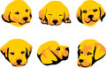 Puppy head of golden retriever color illustration Royalty Free Stock Photo