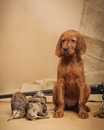 Puppy and hunting accessories horizontal studio Stock Image