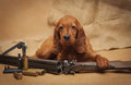 Puppy and hunting accessories horizontal studio Stock Photos