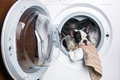 Puppy inside the washing machine french bulldog Royalty Free Stock Photos