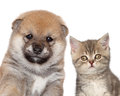 Puppy and kitten, close-up portrait Stock Photography
