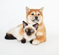 Puppy and kitten friends a cute snuggled on a white background Stock Photos