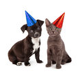 Puppy and kitten wearing party hat black white a gray sitting together festive hats Stock Image