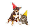 Puppy and kitten wearing party hats a young mixed breed a red yellow birthday sitting together against a white background Stock Image