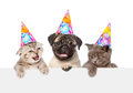 Puppy and kittens in birthday hats peeking from behind empty board. isolated on white Royalty Free Stock Photo