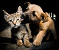 Puppy kitty love and kiss Royalty Free Stock Photo