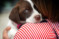 Puppy little girl with Stock Photography