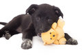 Puppy Play toy Royalty Free Stock Photo